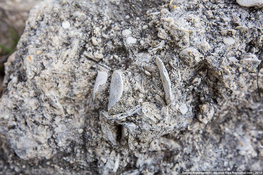 19. Моллюск, застывший в камне.