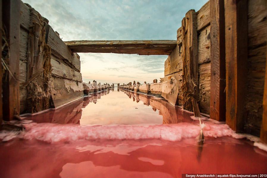 7. Красный цвет воде придает одноклеточная водоросль дюналиелла, которая живет в сильно соленой