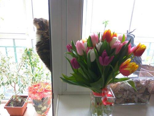 Тюльпаны и Гоша.jpg