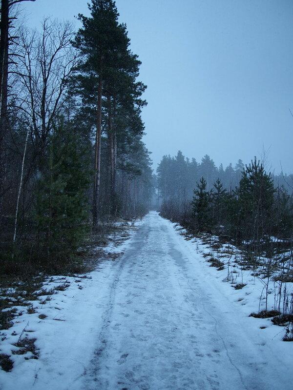 Март в лесу