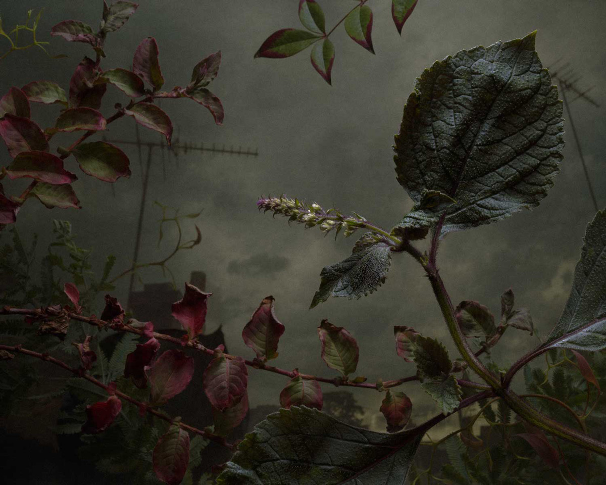 Weeds and Flowers Recast as Shadowy Subjects in Daniel Shipp's Dramatic Photographs