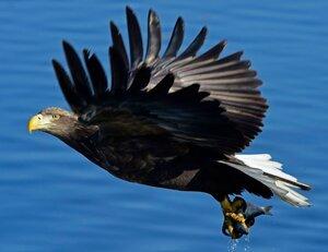 Ради спасения белоплечего орлана из Москвы на Сахалин прилетел врач-орнитолог. Чтобы так нуждающимся людям помогали...