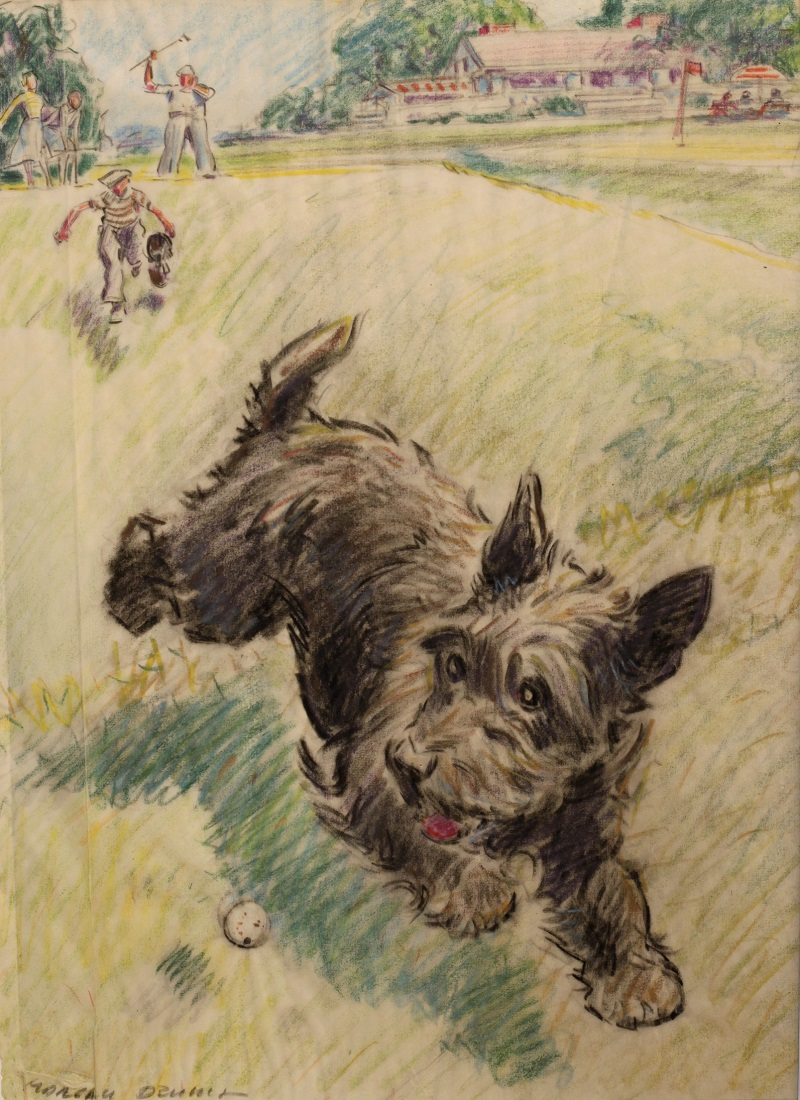Coloured pencil drawing of Scottish Terrier chasing a golf ball by Morgan Dennis