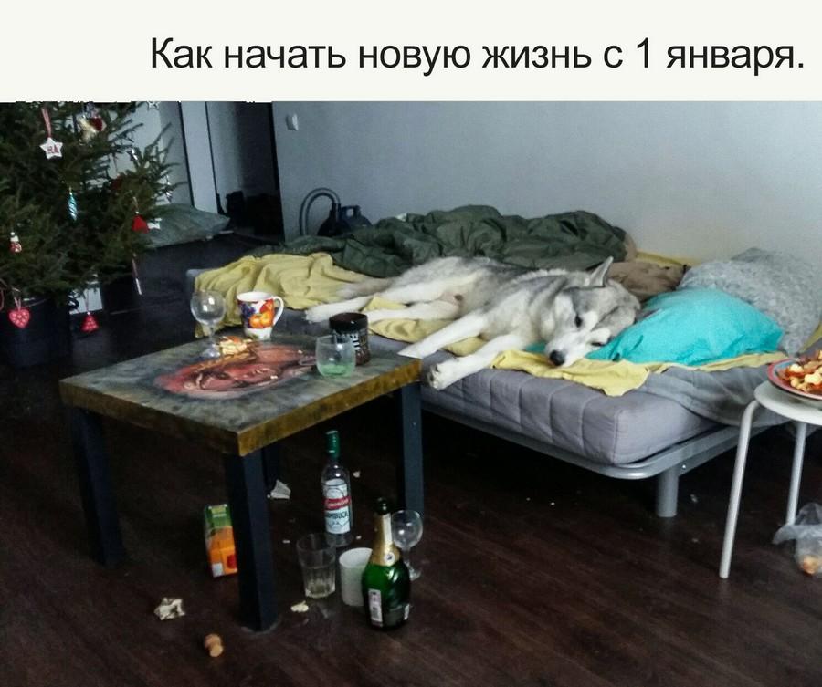 Подборка интересных и веселых картинок 03.01.17