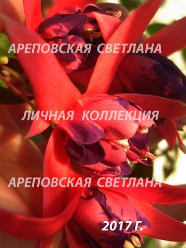 НОВИНКИ ФУКСИЙ. - Страница 5 0_19969c_8bd38ead_L