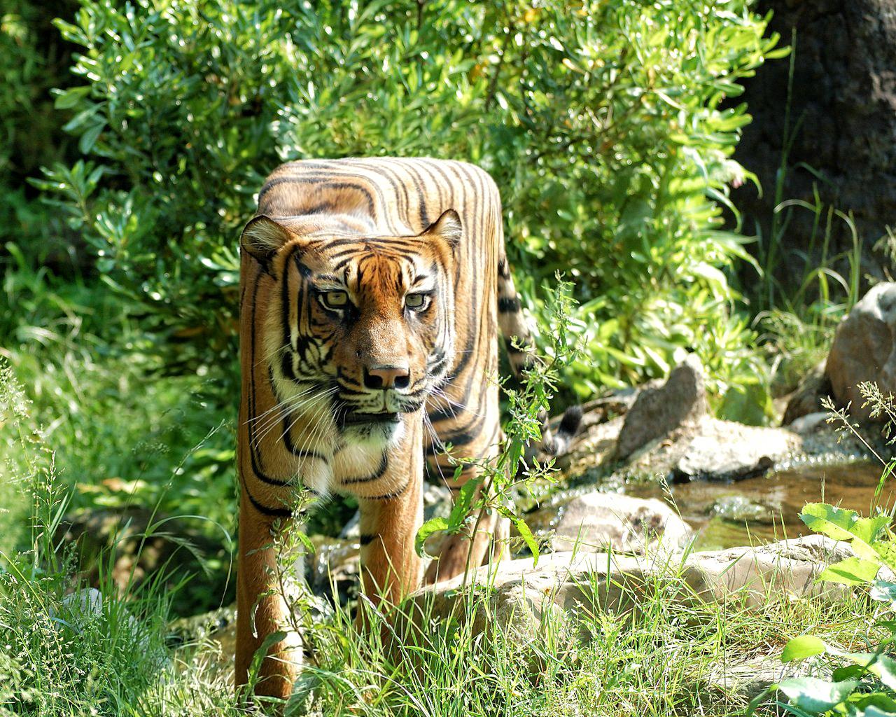 Кубические животные | фото Aditya Aryanto