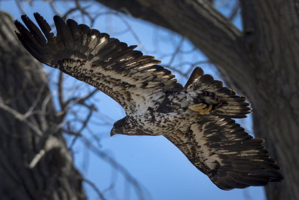 13. Частные предприятия также изображают белоголового орлана, когда хотят подчеркнуть своё амер