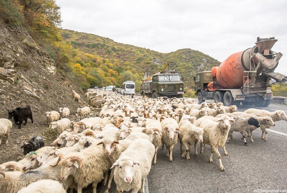 5. Пастухи не против, чтобы мы «пообщались» с животными, но предупреждают, что попытка погладить или