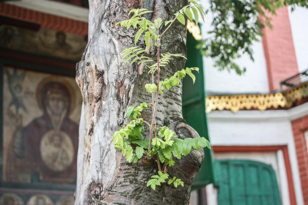 Покровский собор - внешне-17.jpg