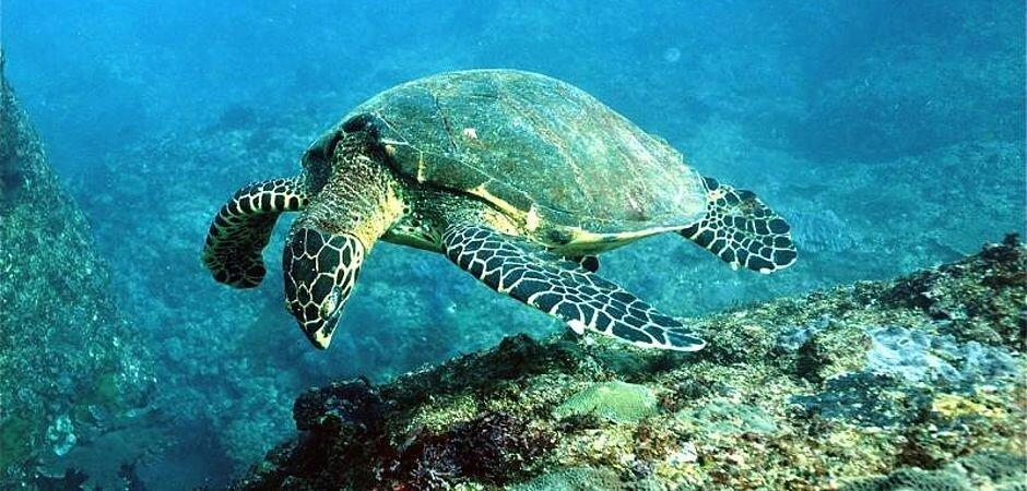 padangbali_bali_turtle.jpg