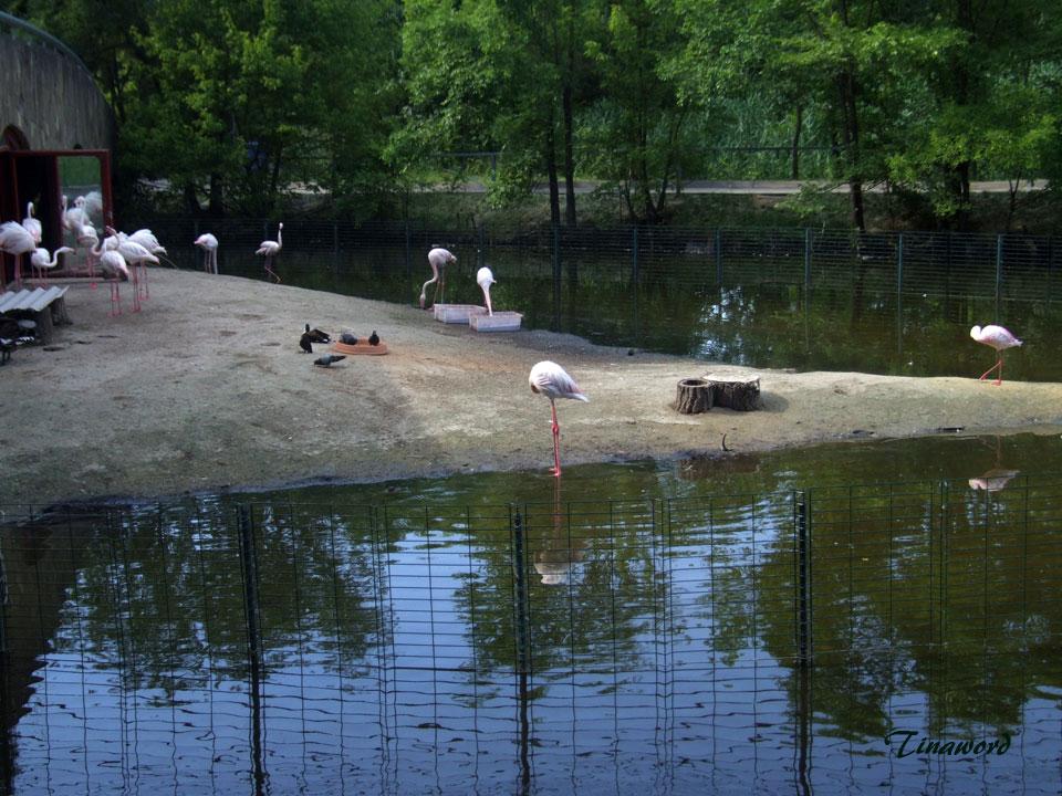 зоопарк-99.jpg