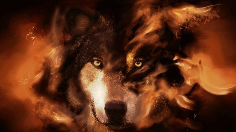 hd обои на рабочий стол волк № 1696609 без смс