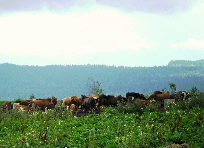 В горах Кавказа, встреча