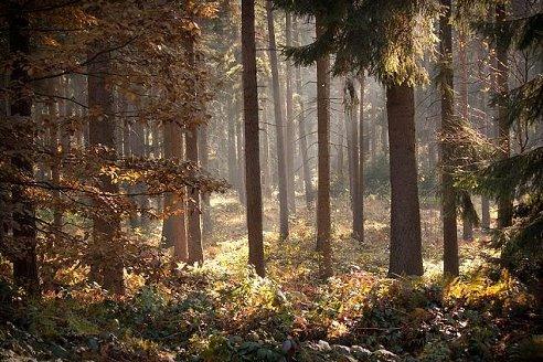 Вещий лес. Осень