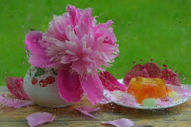 Люблю, когда цветут пионы