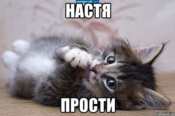 Настя! Прости! Котенок сложил лапки