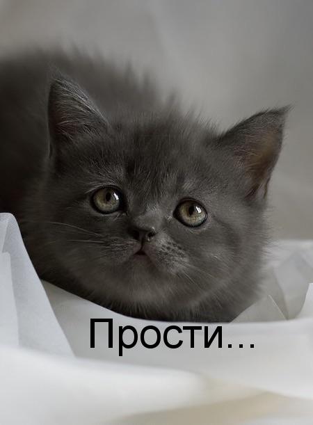 Прости меня котик открытка, день