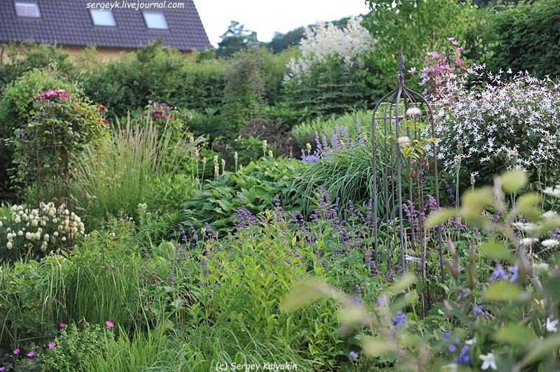 Salvia verticillata Purple Rain (7).JPG