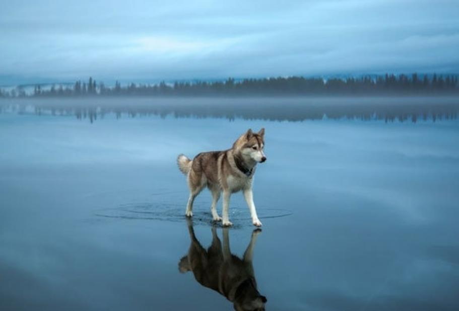 Лайки — божественные собаки.