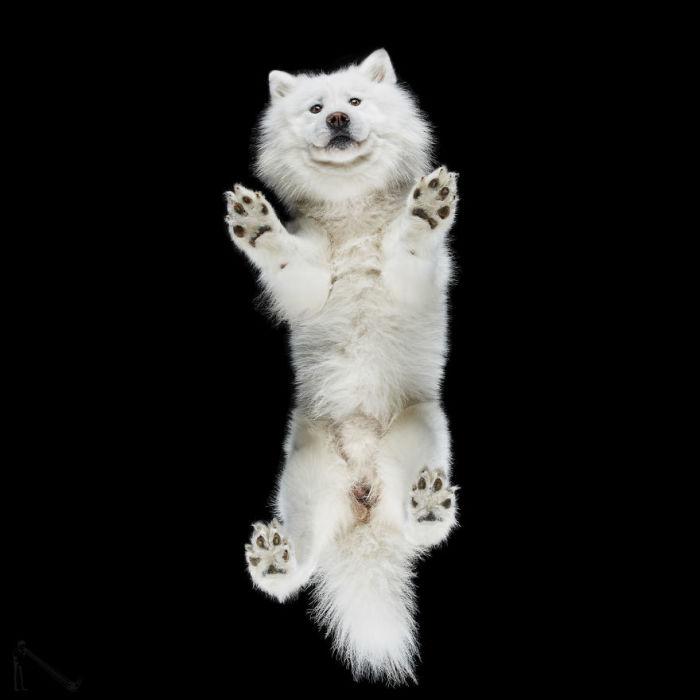 Неугомонный пес