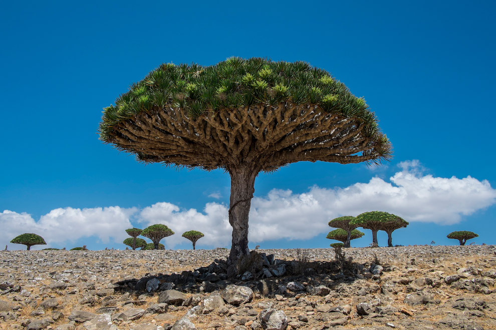 №4. Сомали Сомали известна как страна пиратов. В Сомали нет центральной власти, а политическая