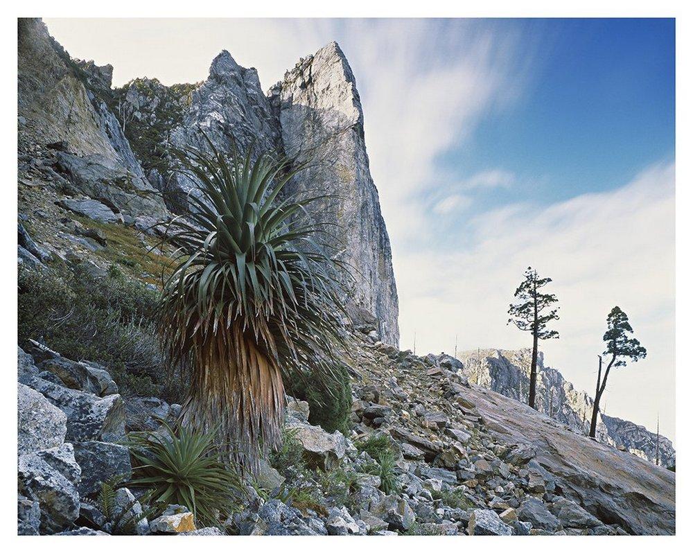 Первобытная красота Тасмании в фотографиях Питера Домбровскиса
