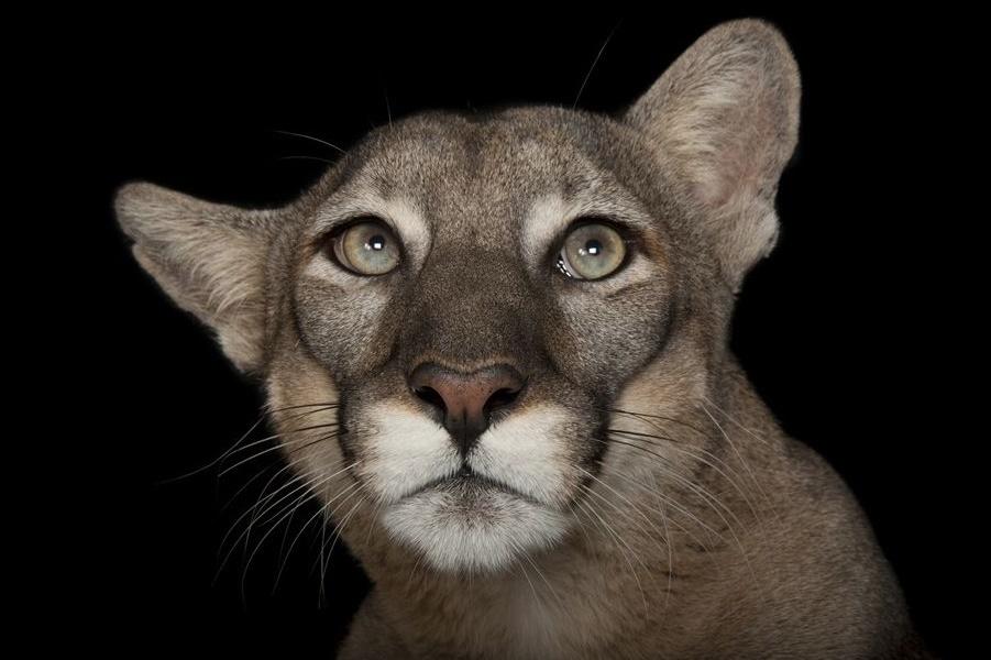 Портреты исчезающих животных. Фотограф-натуралист Джоэл Сарторе