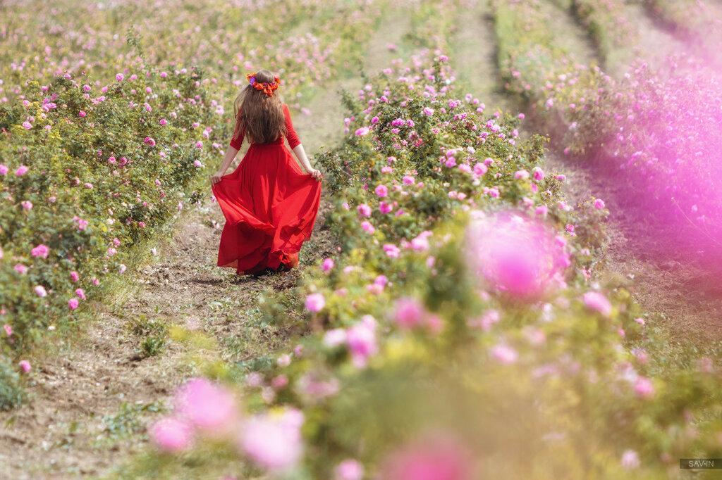 Розы и девушка
