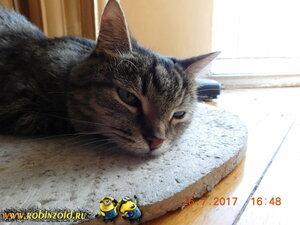кошка после ветлечебницы