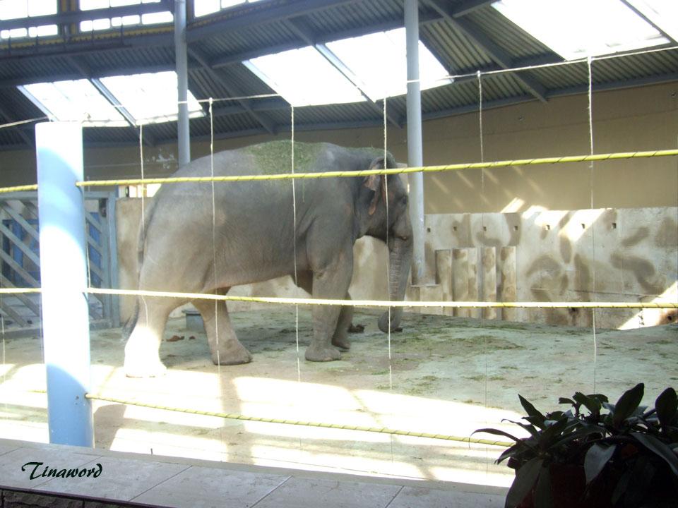 зоопарк-047.jpg