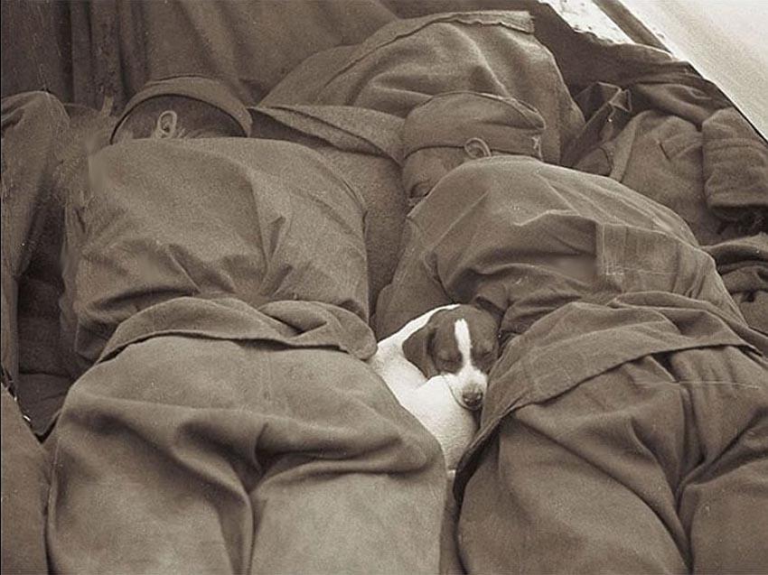 Щенок спит с советскими солдатами на Второй мировой войне.(пост-2)