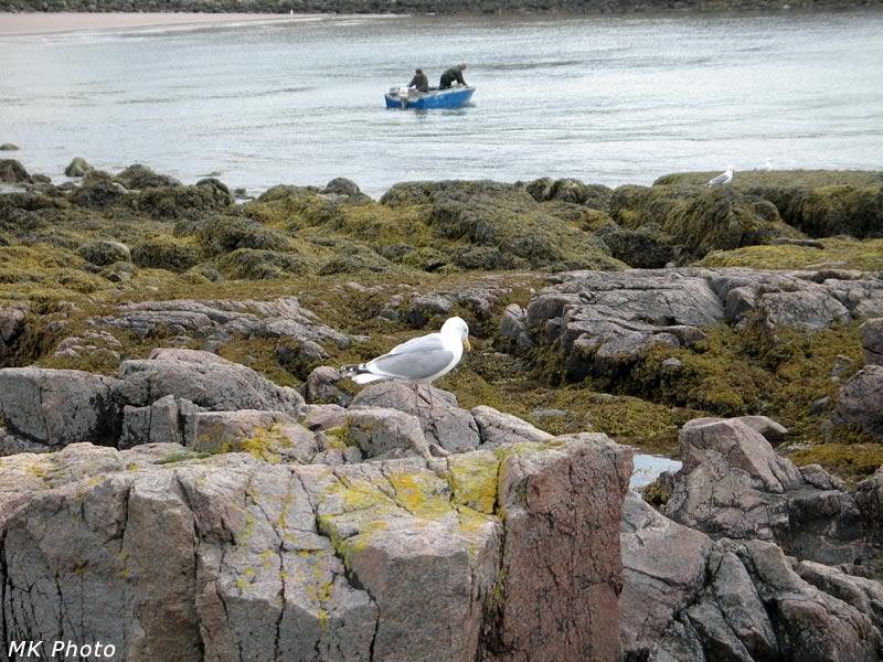 Чайка и рыбаки