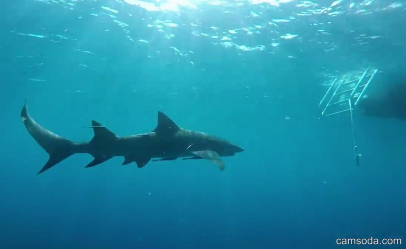 Во время подводных съемок порноактрису укусила за ногу акула