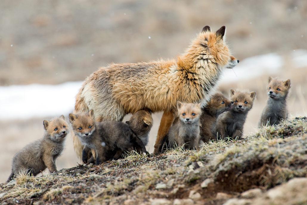 Дикие животные на снимках Ивана Кислова