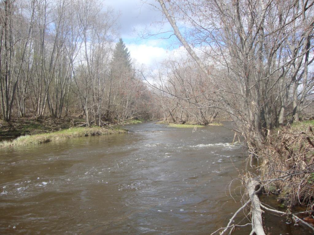Река Береза весною.