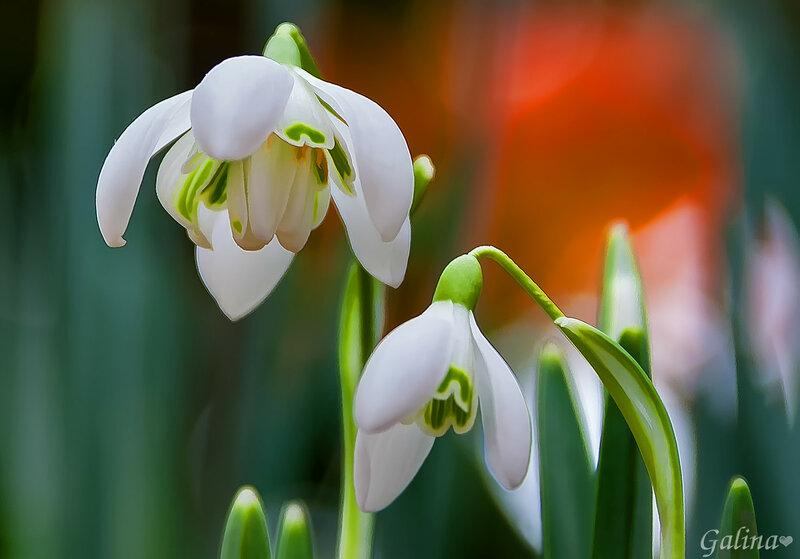 Звенит весна