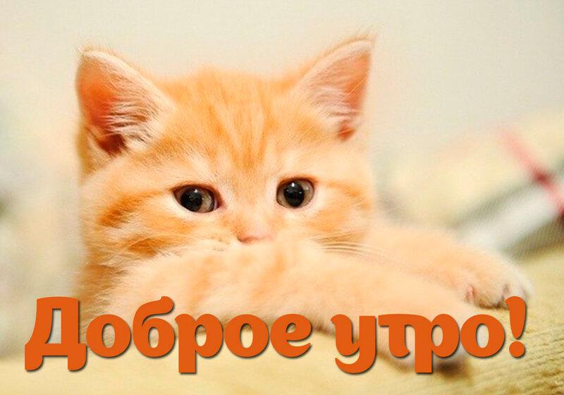Хорошо картинка, картинки с добрым утром котиками для мужчины