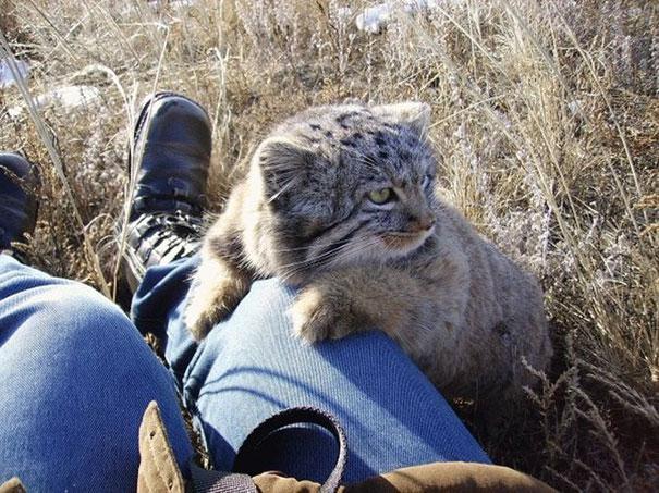Когда котята выросли, пришлось отпустить их на волю.
