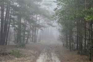 Дорога в сосновый бор...