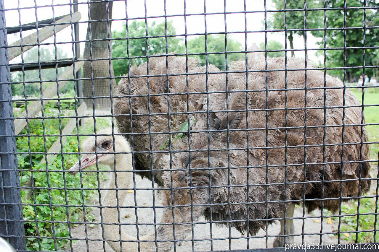 Московский зоопарк-18.jpg