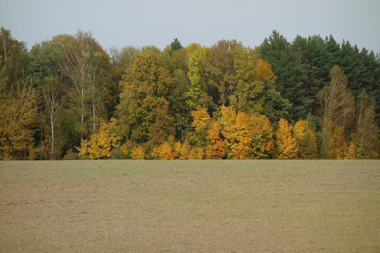 поле и роща в осеннем наряде