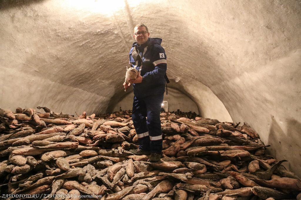 Сколько рыбы выловили российские рыбаки в 2020 году РЫБОПЕРЕРАБАТЫВАЮЩАЯ,ПИЩЕВАЯ