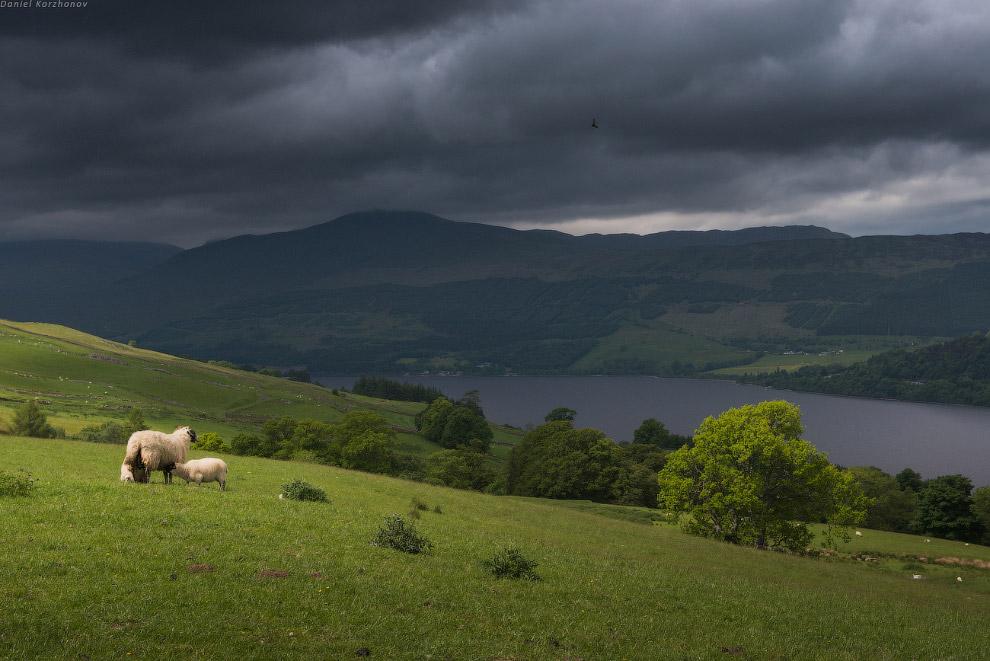 Да, все озера Шотландии именно такие — вытянутые на десяток-другой километров...