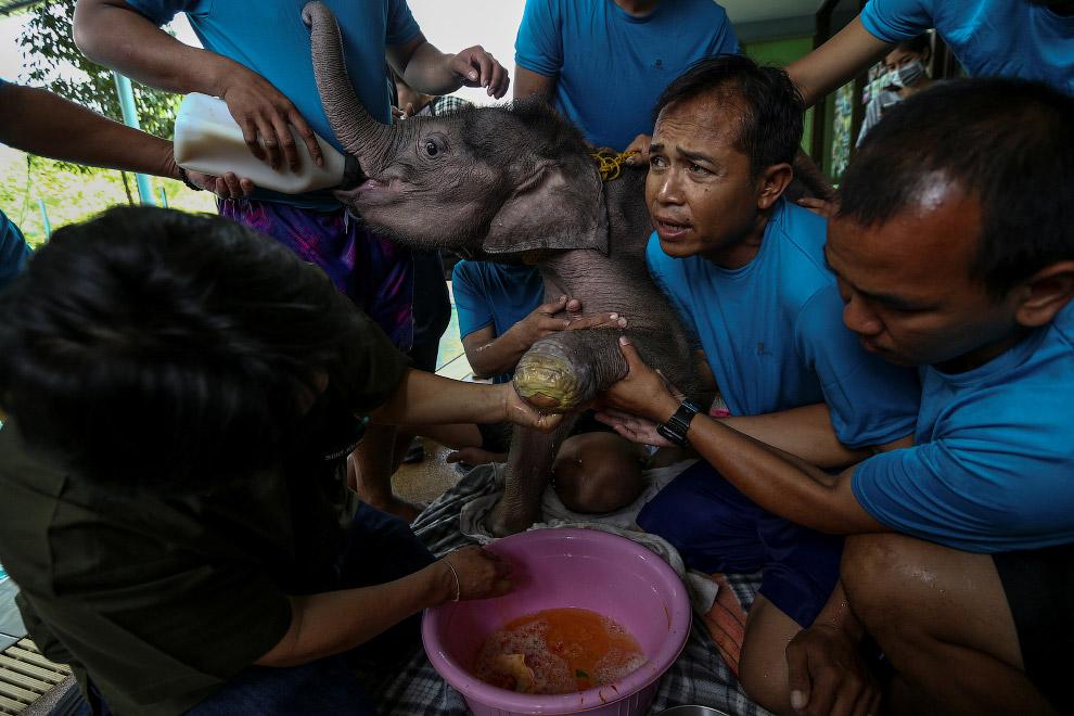 9. Накладывание повязки. (Фото Athit Perawongmetha | Reuters):