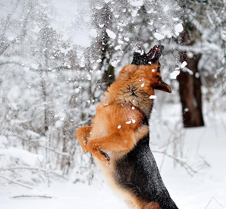 Источник: Nikon Official , сайт автора Николая Сотскова   В какой-то момент некоторые фотогр