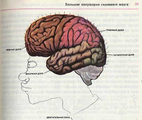 Забавно разрисованный учебник биологии перенесет вас назад в 9-й класс