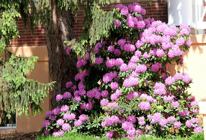 Майские цветочные картины.