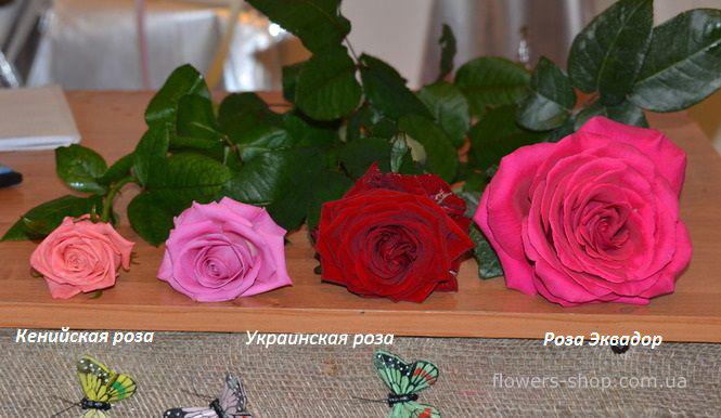 сравнение роз