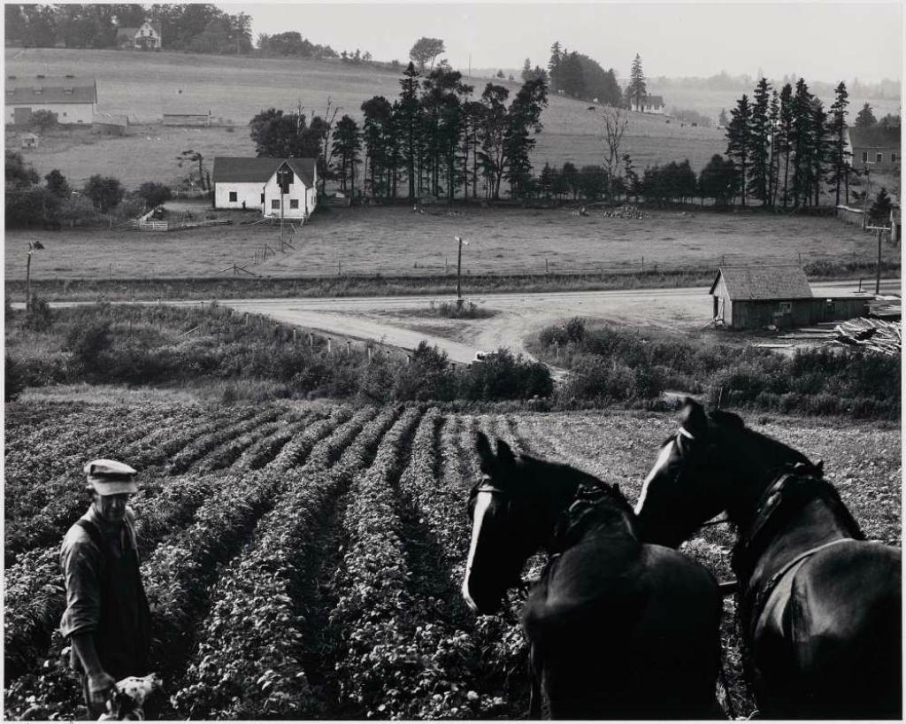 ШАРЛОТТАУН, ОСТРОВ ПРИНЦА ЭДУАРДА, ЛОШАДЕЙ И ФЕРМЕРЮсуф КаршДАТА:1953