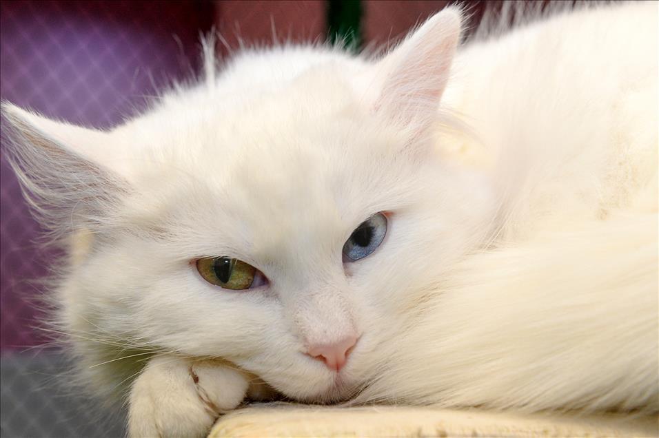 кошка-бел.jpg